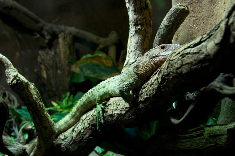 Low angle view of lizard on branch in forest