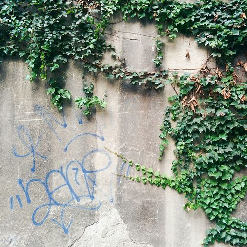 Graffiti on wall with gorgeous plants.