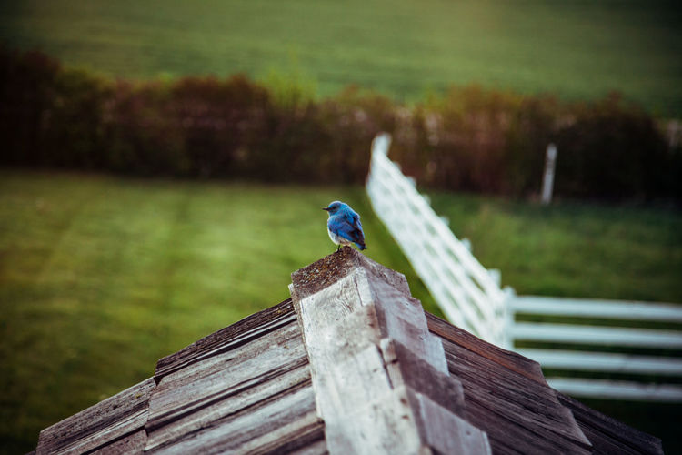 Close-up of bird perching on wooden roof top