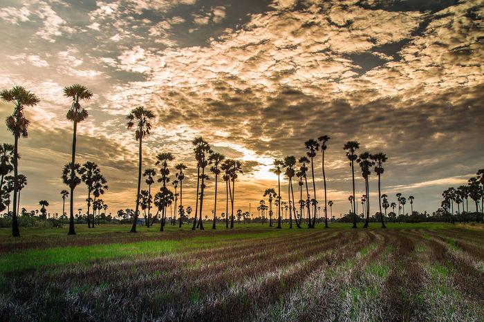 Tree Palm Tree Sport Sunset Oil Pump Sky Beach Volleyball