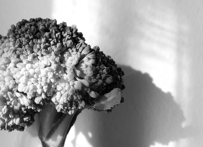 Freshness Beauty In Nature Extreme Close Up Black & White Blackandwhite EyeEm Best Shots - Black + White Selective Focus Vegetable Broccoli Vegetables & Fruits Shades Of Grey Shapes , Lines , Forms & Composition Monochrome Creative Light And Shadow Light And Shadow Pattern, Texture, Shape And Form Studio Shot Shadow Abstract Photography Learn & Shoot: Simplicity Low Angle View WhiteCollection White Album From My Point Of View Light