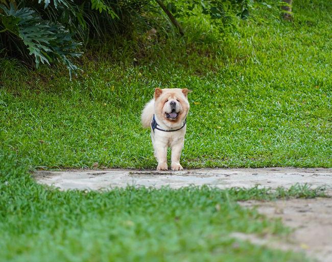Portrait of dog on footpath