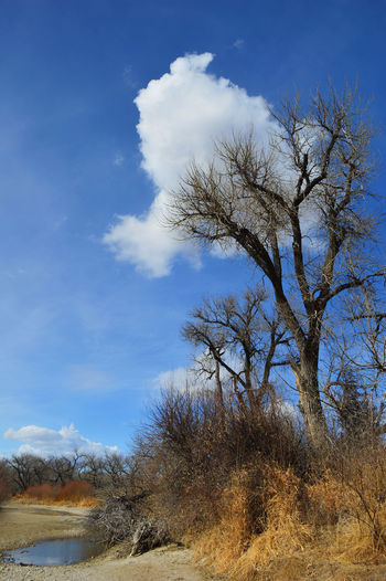 On the river bank of Platte River in Wyoming Bare Tree Beauty In Nature Blue Cloud - Sky Day Landscape Nature Outdoors South Of Lingle Wyoming Tranquil Scene