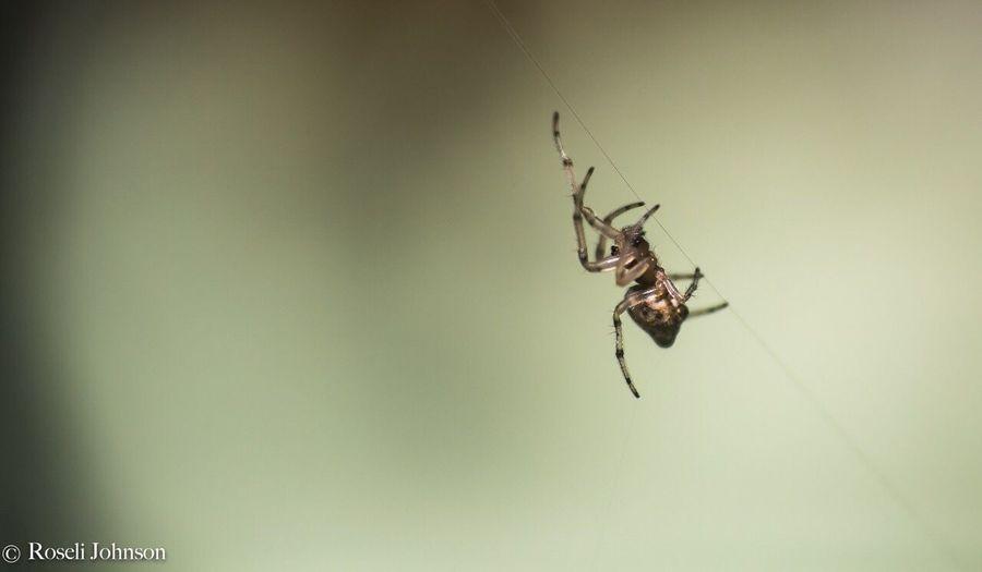 Spider Macros