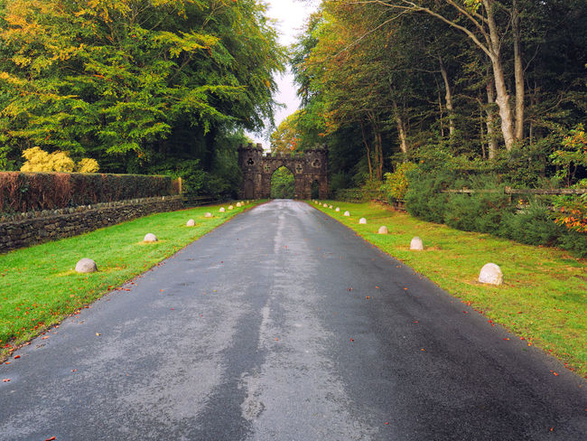 Northern Ireland Northern Ireland Tourism Tollymore Forest Park Animal Themes Beauty In Nature Day Grass Green Color Growth Nature No People Outdoors Road Scenics Sky The Way Forward Tranquil Scene Tranquility Transportation Tree