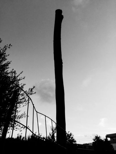 mirrorless Blackandwhite Photography Blackandwhite Sky Low Angle View Silhouette Tree Plant Nature No People Cloud - Sky Architecture Tall - High