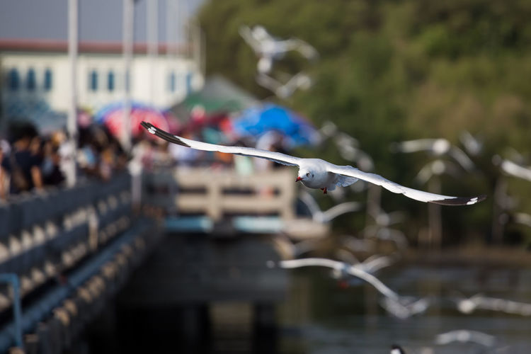 Seagull Architecture Bird Building Exterior Built Structure Close-up Clothesline Day Flying Focus On Foreground Incidental People Motion Nature Outdoors Railing River Selective Focus Water