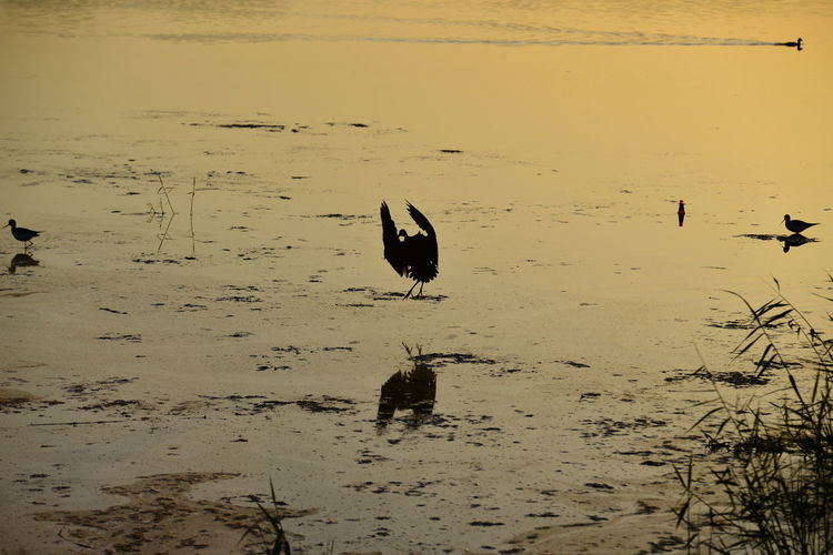 Animal Animal Themes Animal Wildlife Animals In The Wild Beach Beauty In Nature Bird Day Lake Land Nature No People One Animal Outdoors Reflection Sunset Vertebrate Water Waterfront