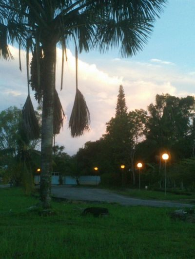 Yesterday Evening Night Lights Palm Trees Sky And Clouds After The Rain My Inspiration