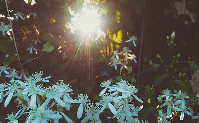 Rise and shine Sunlight Dreamcatchers White Flowers Mood Instamood Instapic