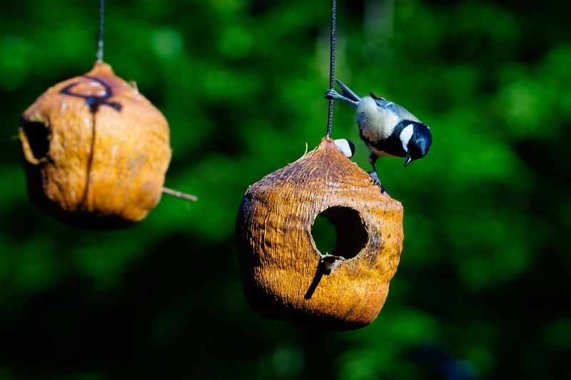 Close-up of bird hanging from feeder