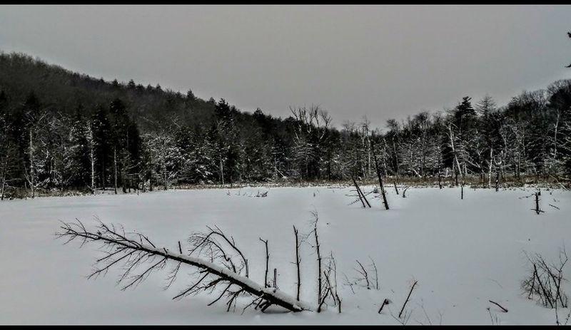 Otis Winter Tree Snow Nature No People Outdoors Lake