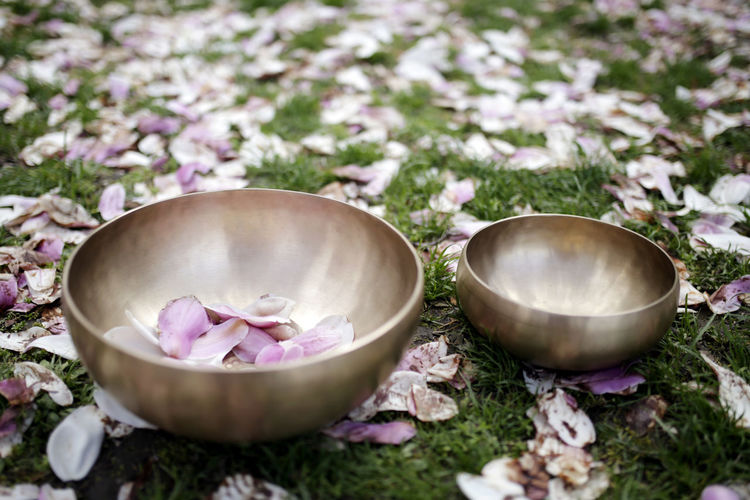 Magnolia Meditation Pure Singing Bowl Bowl Close-up Day Flower Freshness Meditate Metal Nature No People Outdoors Plant Still Life Wellbeing