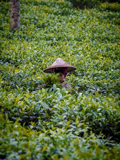 Tea Plantation  Tea Garden Portrait Of A Woman Chittagong Hill Tracts Bangladesh Portrait Portraiture Bangladesh 🇧🇩 Plant Green Color Nature Growth Grass No People Day Land Selective Focus Beauty In Nature Field Vegetable Fungus Mushroom Close-up Outdoors Moss Food Freshness One Animal My Best Travel Photo
