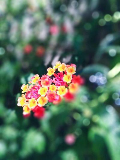🎵Alive (Gabrielle Aplin) http://youtu.be/CL4l-KK6JbI Feel Alive Alive  Summer Flower Summer Flowers Roppongi Minatoku Tokyo Tokyo,Japan Masako201607