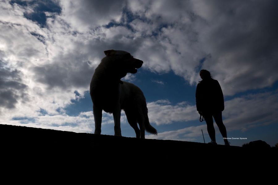 White Sheppard NewToEyeEm White Sheppard Sky Mammal Dog Standing