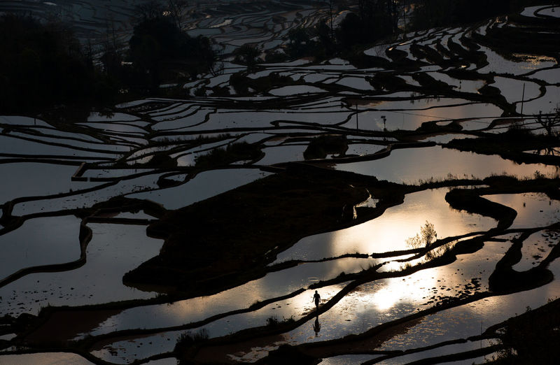 Water Nature Tranquility High Angle View Tree Reflection Beauty In Nature Scenics - Nature Tranquil Scene Day Land Landscape Environment Plant Non-urban Scene Shadow Outdoors One Person One Person Walking Paddy Field Rice Terraces Yuanyang Sunlight