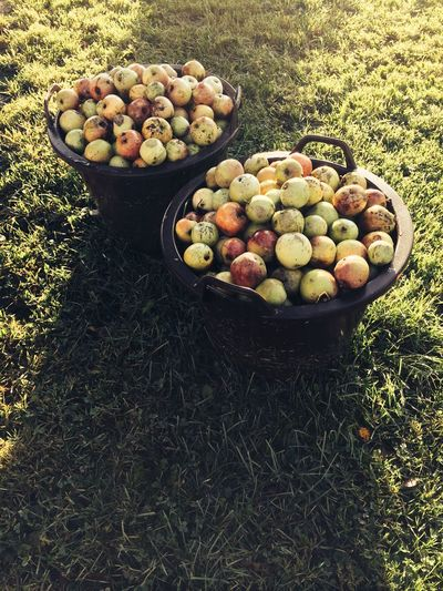 High Angle View Of Apples In Containers On Grassy Field