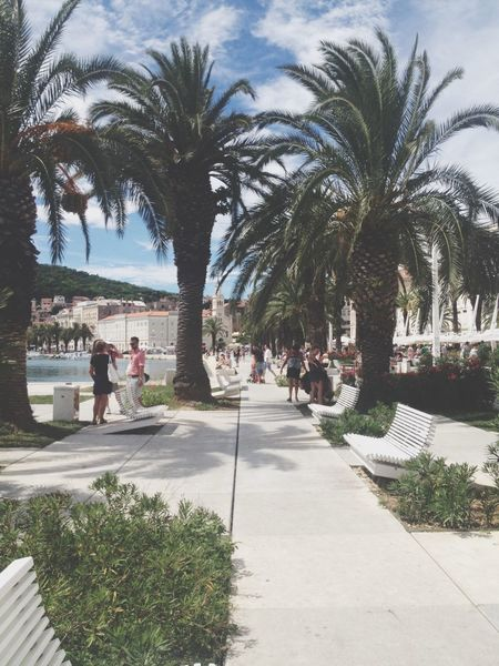 Palm Trees Summer Holiday Enjoying Life