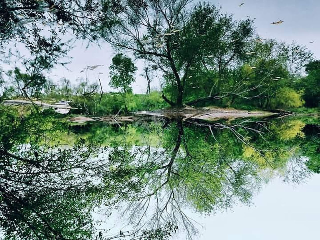 tree, water, reflection, lake, tranquility, nature, tranquil scene, day, waterfront, outdoors, no people, forest, beauty in nature, growth, branch, scenics, tree trunk, sky, dead tree