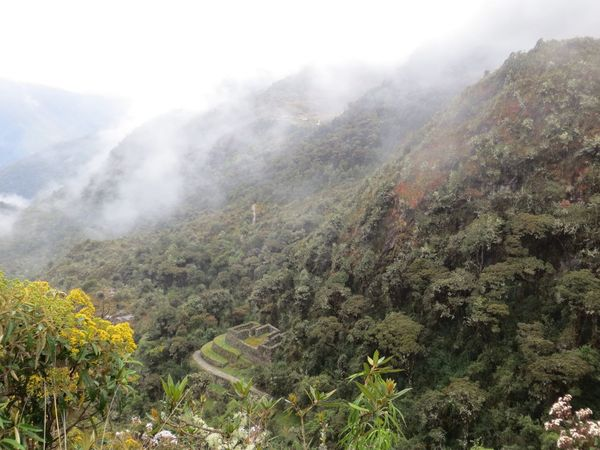 Mountain Nature Fog Landscape Plant No People Scenics Beauty In Nature Tranquility Day Tranquil Scene Growth Mist Tree Mountain Range Outdoors Hazy  Sky Travel Destinations Peru Inca Trail Inca Ruins Ancient Civilization Old Ruin History