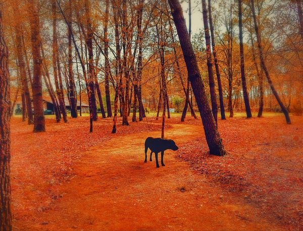 Animal Themes One Animal Animals In The Wild Domestic Animals Edited Photography Creativity Creative Light And Shadow Art Is Everywhere Landscape Tree The Great Outdoors - 2017 EyeEm Awards Beauty In Nature Nature Landscape_Collection Landscapes Orange Color Orange Is Beautiful Orange Is The New Black Dogs Live For The Story Pet Portraits The Week On EyeEm