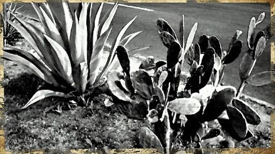Símbolos mexicanos