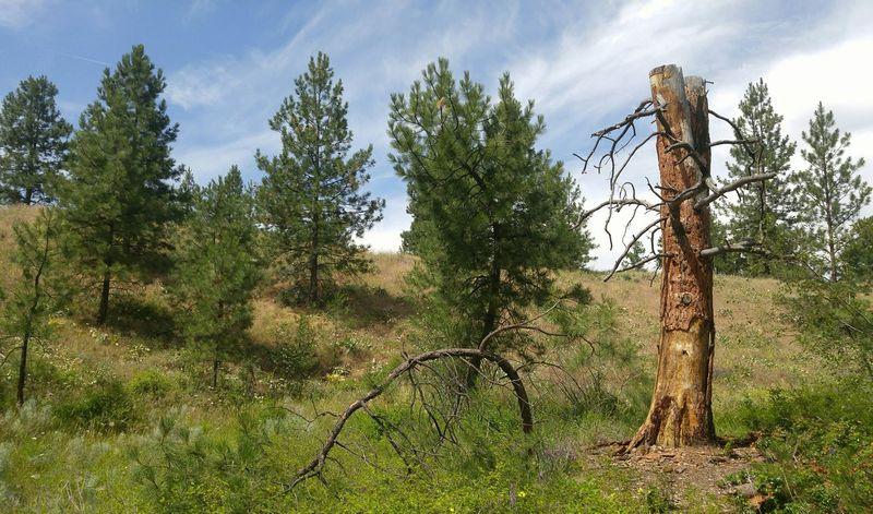 Oldtree Stillstanding Beauty Of Nature Treeoflife Nature Lover