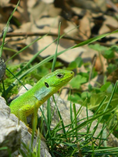 One Animal Animal Themes No People Green Color Close-up Outdoors Nature EyeEm Beauty In Nature EyeEm Nature Lover EyeEm Gallery Focus On Foreground Lizard