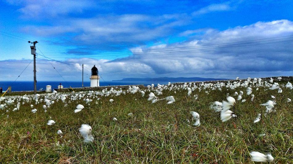 Cotton Grass Meadow Lighthouse Dunnet Head Scotland Caithness Landscape Sky And Clouds