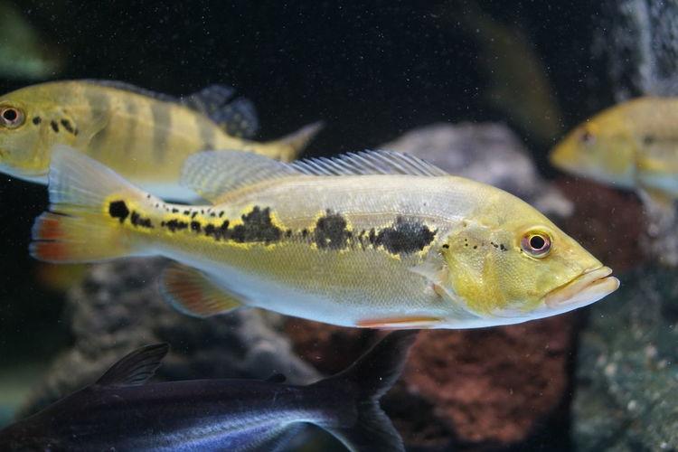Fish swimming in aquarium