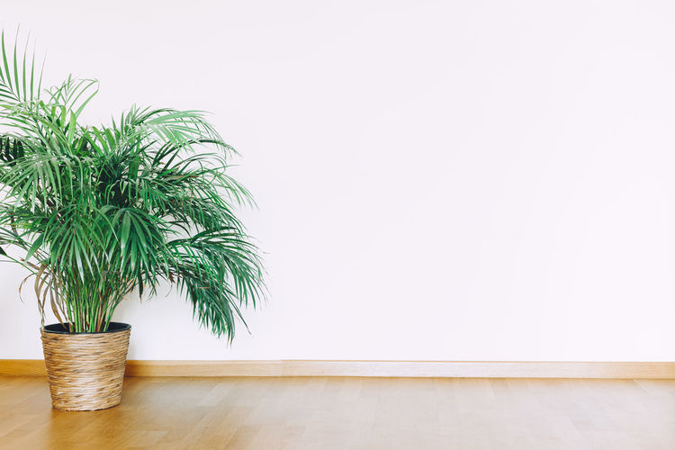 Potted plant against white wall