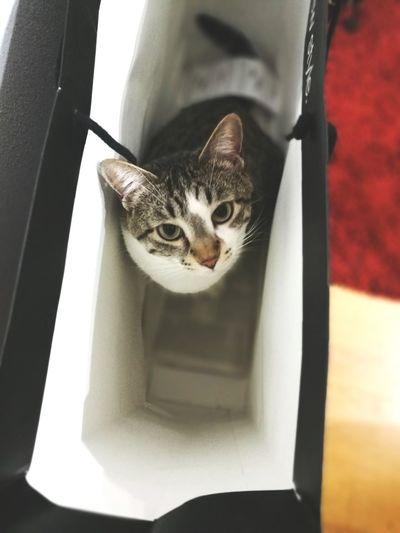 Boxlover I Am Beautiful Katzen Cats Boxlover