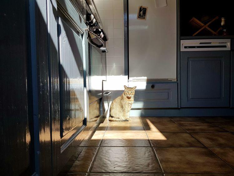 Cats Of EyeEm Little Tiger Door Day EyeEm Home Light And Shadows EyeEm Best Shots Lighthouse Silent Moment Indoors  Animal Themes