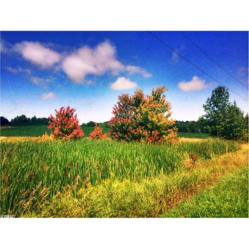 Brucegreysimcoe signs of Autumn Fall Colors Bike Ride