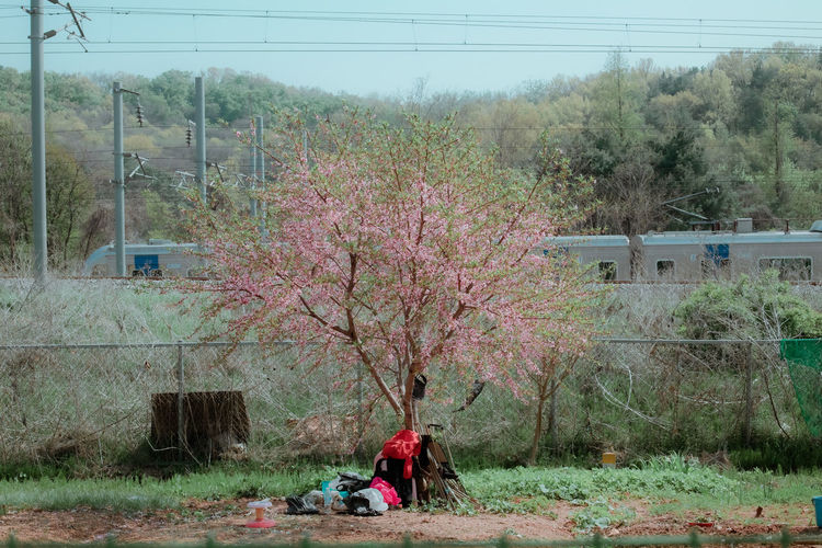 Full length of pink flowers on field against trees
