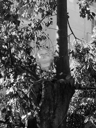 Headless tree. Showing Imperfection Showing Imperfections Tree HEAD Bodylesshead Blackandwhite Black & White Black And White Blackandwhite Photography Mobilephotography Mobile Photography Sculpture Head Sculpture Seen On My Walk Seen At College Seeninthecity Seentoday Lieblingsteil