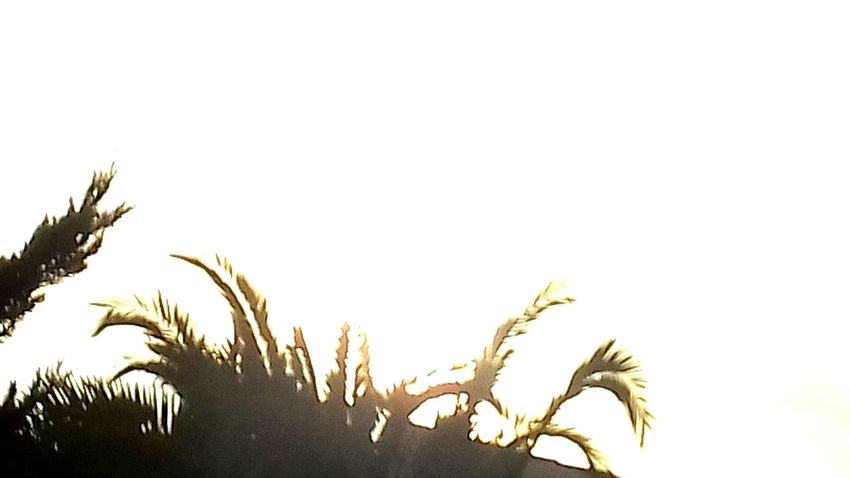 Nature Growth Sky Plant Tree Silhouette Outdoors Palm Tree Day Sunset Beauty In Nature