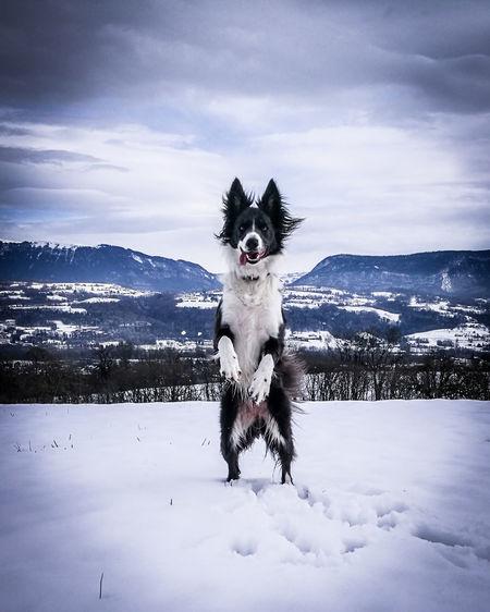 Portrait of dog on snow against sky