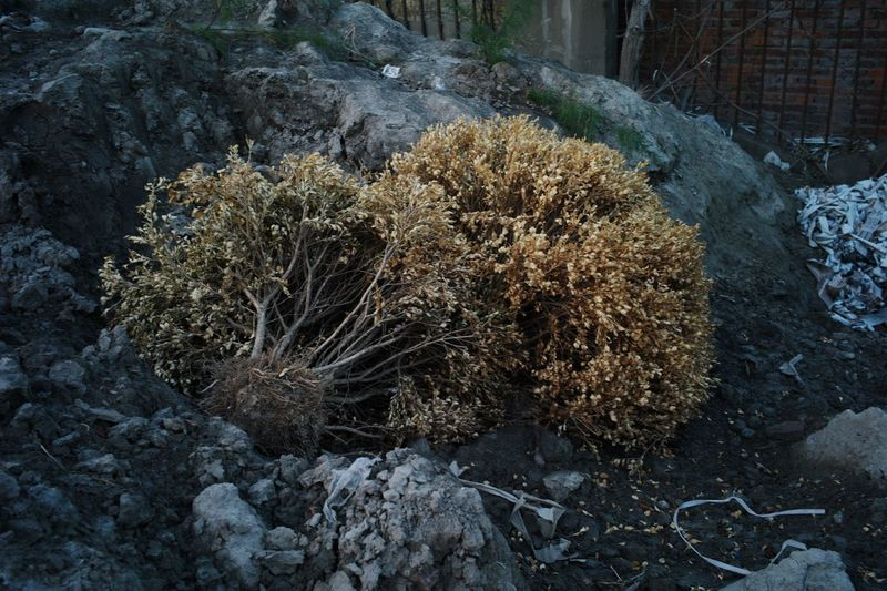 Plants growing on rocks during winter