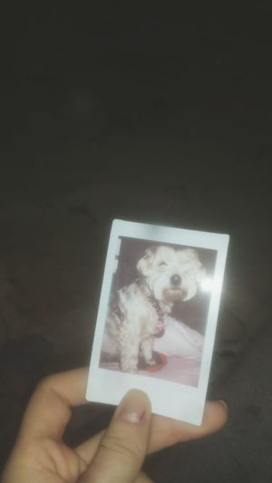 Hanging Out Poloroid Taking Photos Check This Out