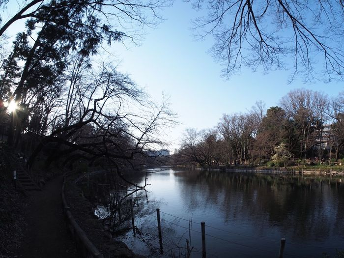 Finding New Frontiers Japan No Filter Inokashira Park Tokyo Day Outdoors Nature No People Sky Lake Tree Miles Away Welcome To Black