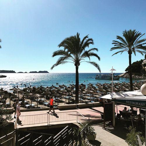 Mallorca☀️🌴👙🌊 Beach Palm Tree Vacations Outdoors Sea First Eyeem Photo