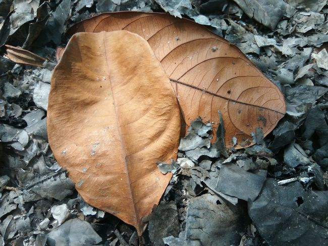 Scorched Burn Leaf Fall Leaves Dry Burning Hot Fire Outdoor Nature Dead Leaf Close-up Tree Ring Deforestation Tree Stump Forestry Industry Pile Woodpile Fall Firewood Timber Axe Lumber Industry Fossil Fuel Environmental Issues Environmental Damage Log