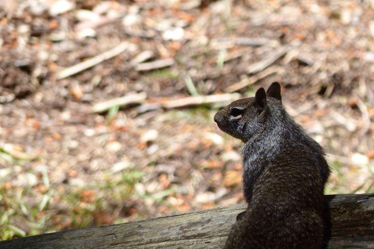 Squirrel Yosemite National Park