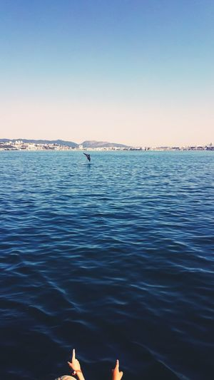 Look its a... Dolphins Dolphin Dolphin Watching  Dolphinlover Sea Check This Out That's Me Taking Photos Enjoying Life EyeEm Gallery EyeEm Two Is Better Than One TwoIsBetterThanOne Portugal Setubal Huaweiphotography Huawei Huawei Shots Seascape Photography Seascapes Seascape Awesome Jump