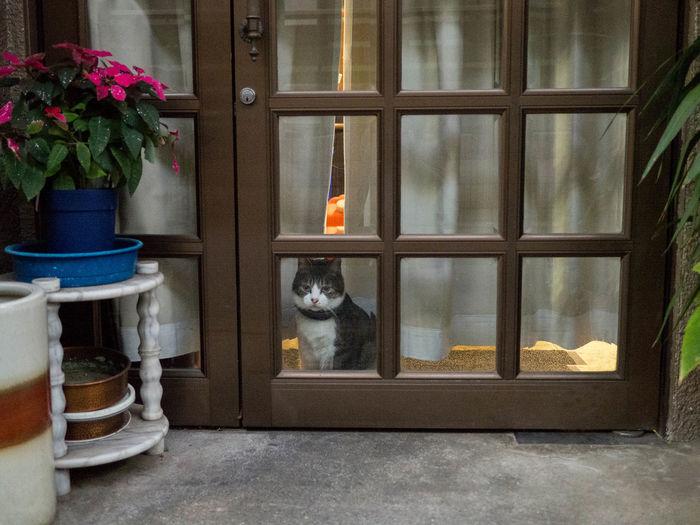 Portrait of cat sitting on flower pot