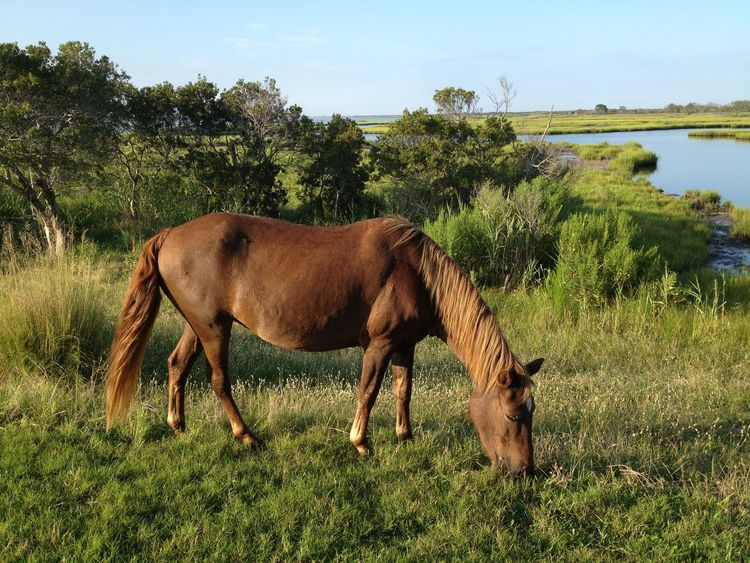 Animal Themes By The Bay Grassy Field Grazing Horse Nature Wild Pony
