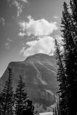 Lake Louise back drop Tree Mountain Forest Tree Area Pinaceae Politics And Government Pine Tree Sky Landscape Snowcapped Mountain Mountain Peak Mountain Ridge Rocky Mountains