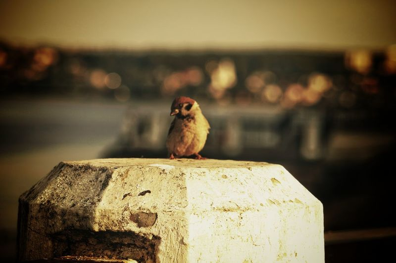 Close-up of bird perching on wood against blurred background